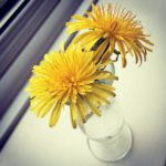 Dandelions in a glass